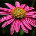 Hot Pink by Robert Fawcett