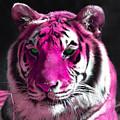 Hot Pink Tiger by Rebecca Margraf