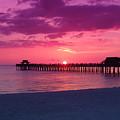 Hot Purple by Florene Welebny