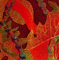 Hot Ulu by Jamie Laniakea Clark