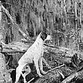 Hound Dog by Granger