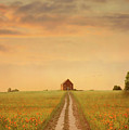 House At The End Of A Track In A Poppy Field by Lee Avison
