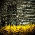 House Flowers by Michael L Kimble