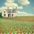House In The Countryside by Amanda Elwell