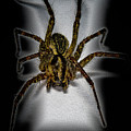 House Spider by Robert Storost