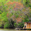 Houseboat On The Apalachicola River by Carla Parris
