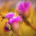 Hoverfly Thistle #g7 by Leif Sohlman