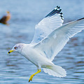 Hovering Seagull by Jeff at JSJ Photography
