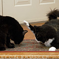 How Cat Fights Start by Clayton Bruster