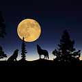 Howling At The Moon by Shane Bechler