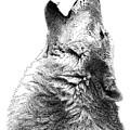Howling Timber Wolf by Scott Woyak
