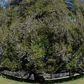 Huge Live Oak Fisheye by Warren Thompson