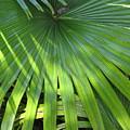 Huge Palm Leaf by Nancy Hopkins