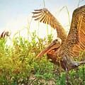 Huguenot Beach Pelicans by Alice Gipson