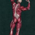 Human Anatomy 20 by Solomon Barroa
