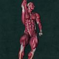 Human Anatomy 37 by Barroa Artworks