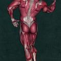Human Anatomy 9 by Solomon Barroa