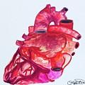 Human Heart Pa by Taylor White