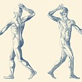 Human Muscular System - Dual View - Vintage Anatomy Poster by Vintage Anatomy Prints