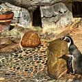 Humboldt Penguin 4 by Michael Gordon