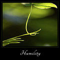 Humility 2 by Mary Jo Allen