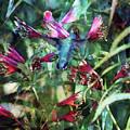 Humming Bird Garden 3027 Idp_2 by Steven Ward