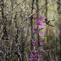 Humming Bird In Nature by Billy Bateman