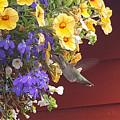 Humming Bird by Michael Madi
