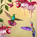 Humming Birds And Fuchsia-jp2784 by Jean Plout