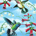 Humming Birds by JQ Licensing