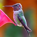 Hummingbird - 28 by Mary Deal