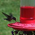 Hummingbird 1 by Vijay Sharon Govender