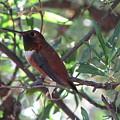 Hummingbird 2 by Mary Ivy