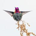 Hummingbird 7445-021418-1cr by Tam Ryan