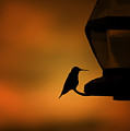 Hummingbird After The Storm by Al  Mueller