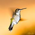 Hummingbird Agains The Sunset by Rikk Flohr
