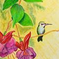 Hummingbird Amongst The Fuchsia by Alison Lynch