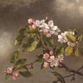 Hummingbird And Apple Blossoms by Martin Johnson Heade