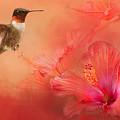 Hummingbird And Peach Hibiscus by Jai Johnson