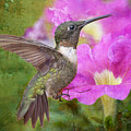 Hummingbird And Petunias by Bonnie Barry