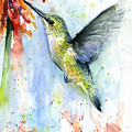 Hummingbird And Red Flower Watercolor by Olga Shvartsur