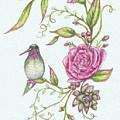 Hummingbird And Rose by Heidi Thompson