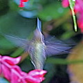 Hummingbird Angel by Peter Gray