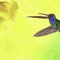 Hummingbird Approach by Janet Fikar
