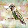 Hummingbird Art by Bonnie Barry