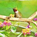 Hummingbird Attitude - Digital Paint 2 by Debbie Portwood