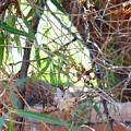 Hummingbird Babies by Kume Bryant