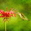 Hummingbird Bee Balm And Textures by Geraldine Scull