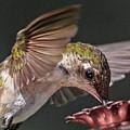 Hummingbird. by Betsy Knapp
