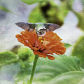 Hummingbird Bow by Kerri Farley